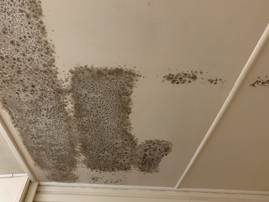Mould removal gold coast needed for mould growing on roof